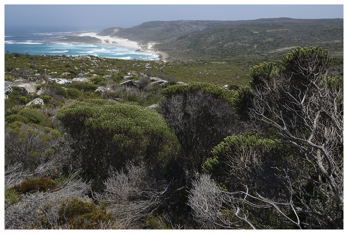 Cape of Good Hope moorlands